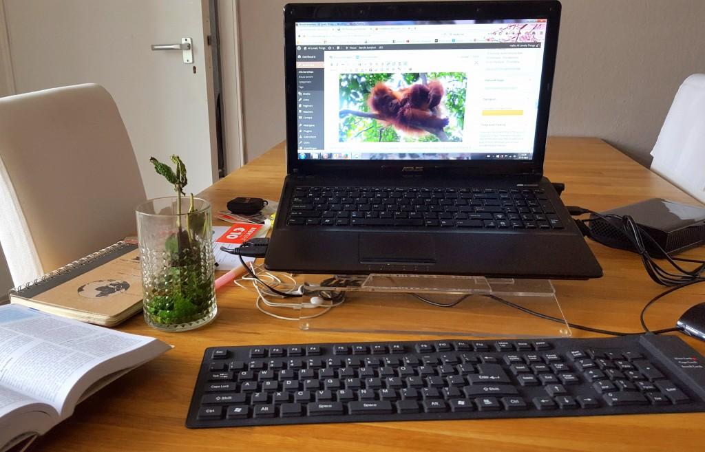 jungletrekking bukit lawang indonesie bloggen