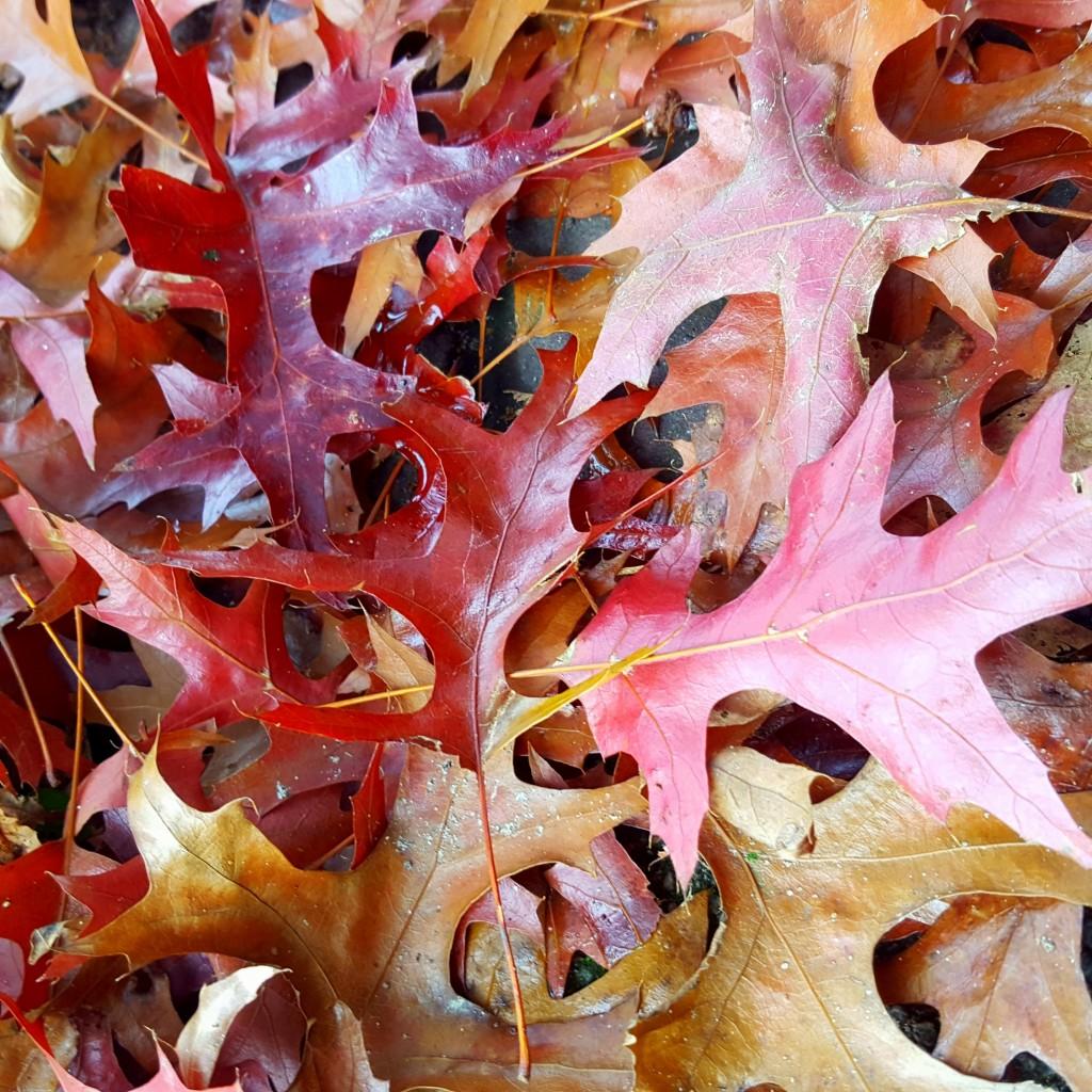 herfst bladeren nijmegen all lovely things