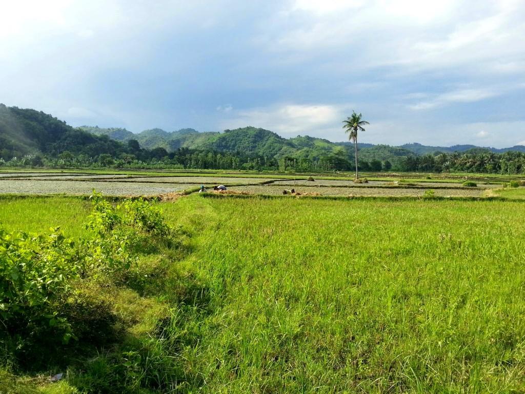 rijstvelden lombok onderweg naar stranden in kuta