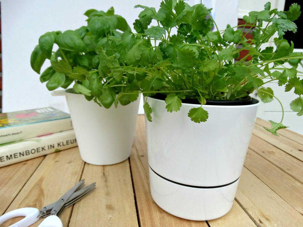 Kruidenplant rosti mepal kruidenpot review