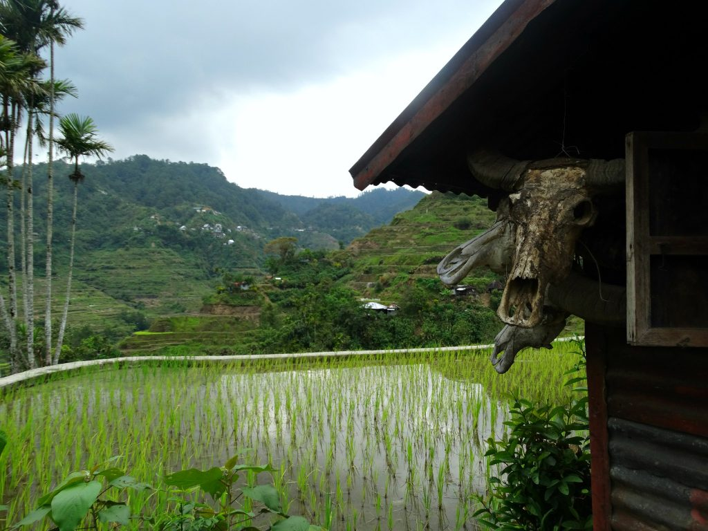 rijstvelden van banaue wat te doen