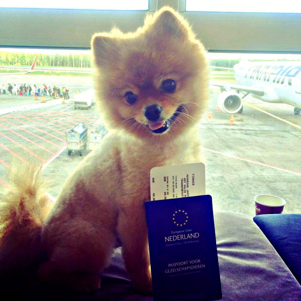 vliegen met je hond dieren paspoort pom