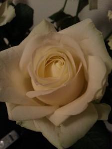 Prachtige lange witte rozen!