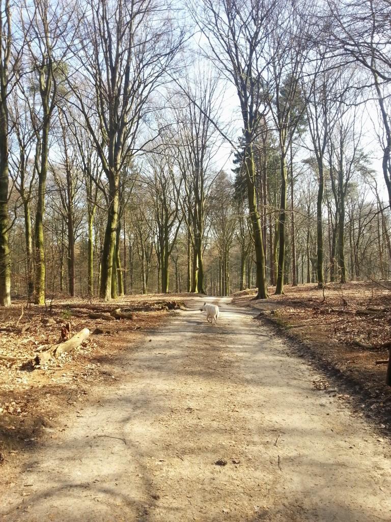 Wat was het een mooie dag voor een boswandeling
