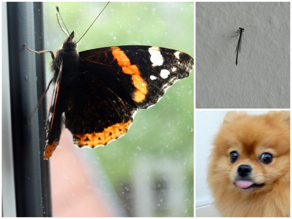 Vlinder, libelle hond dieren diary plog