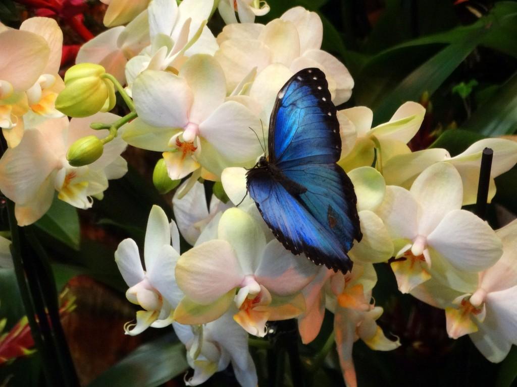 vakantiebeurs vlindertuin