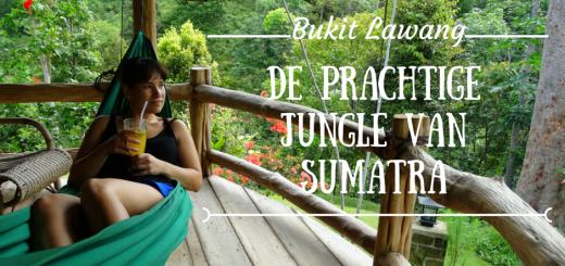 Bukit Lawang, Sumatra #bukitlawang #sumatra #indonesia