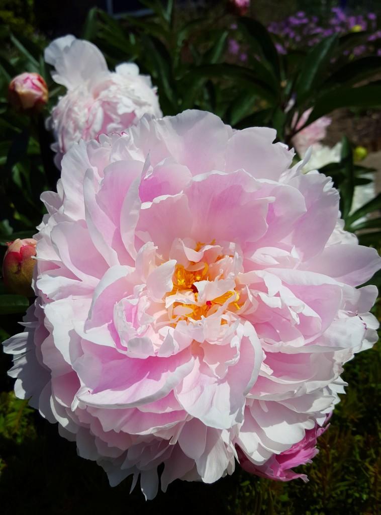 bloem samsung s 6