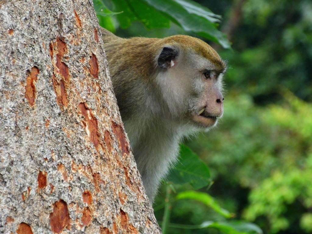 bukit lawang apen  Sumatra