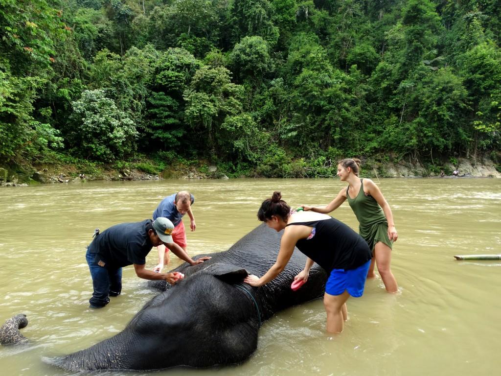 Olifanten wassen in rivier Tangkahan