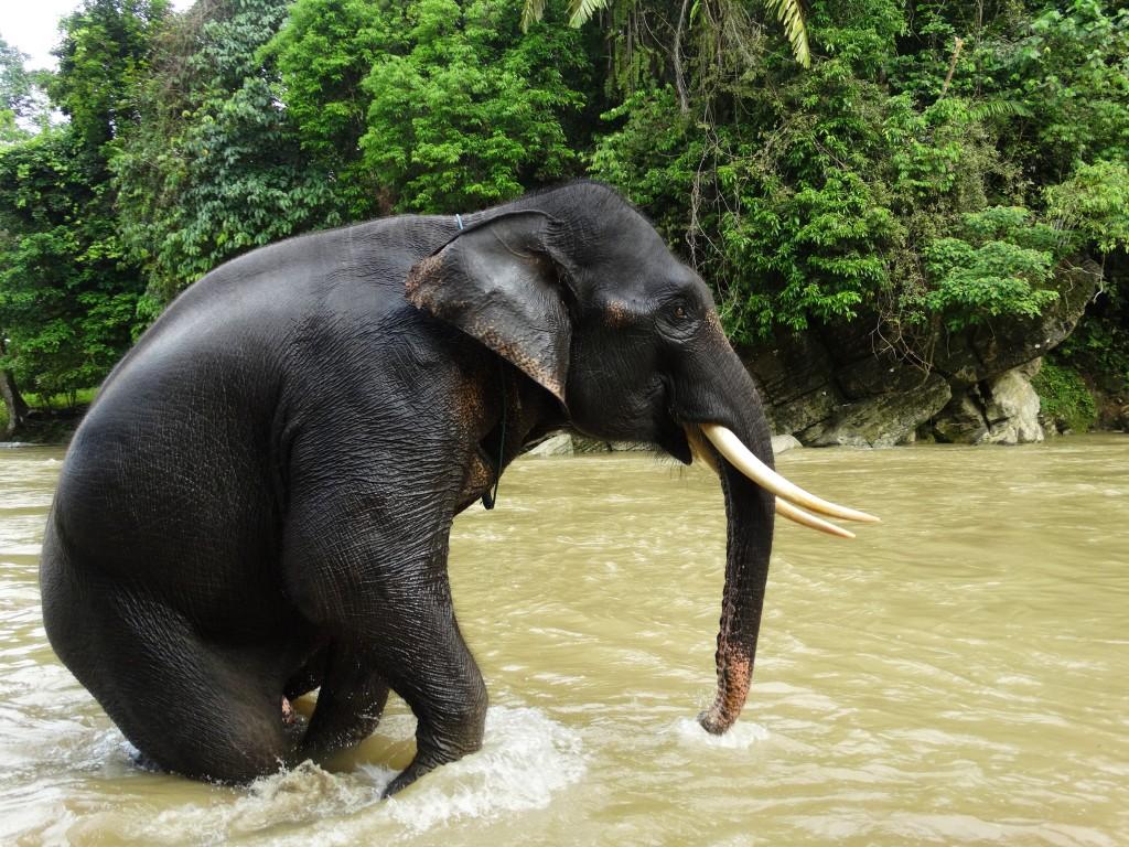 Tangkahan olifanten wassen