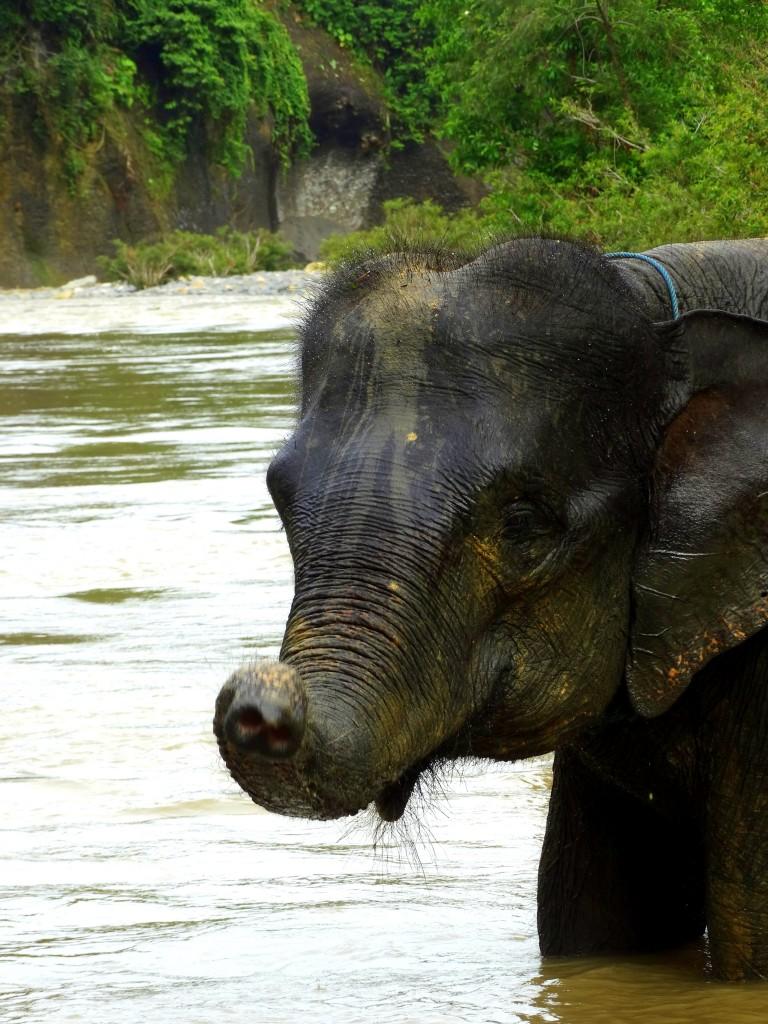 wassen baby olifant Tangkahan Indonesie