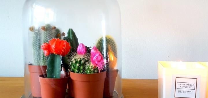 interieur stolp cactussen