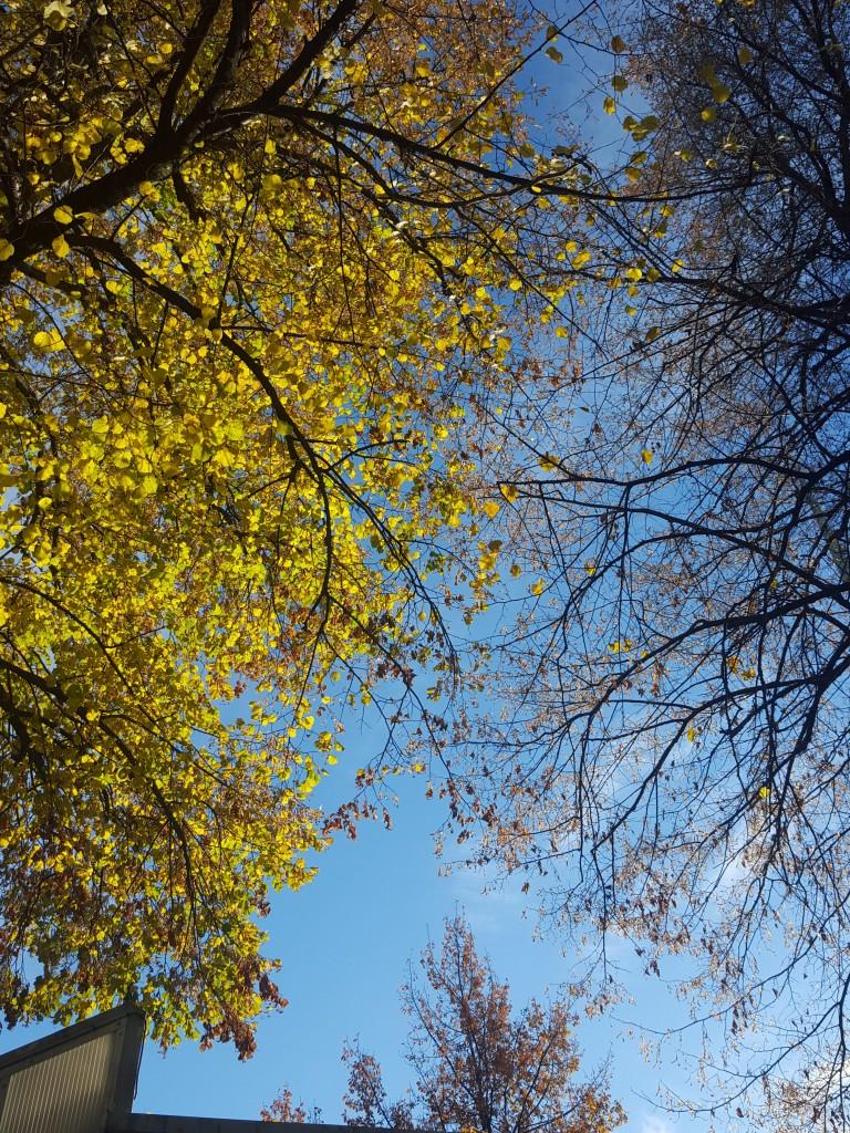 helsinki bomen blauwe lucht