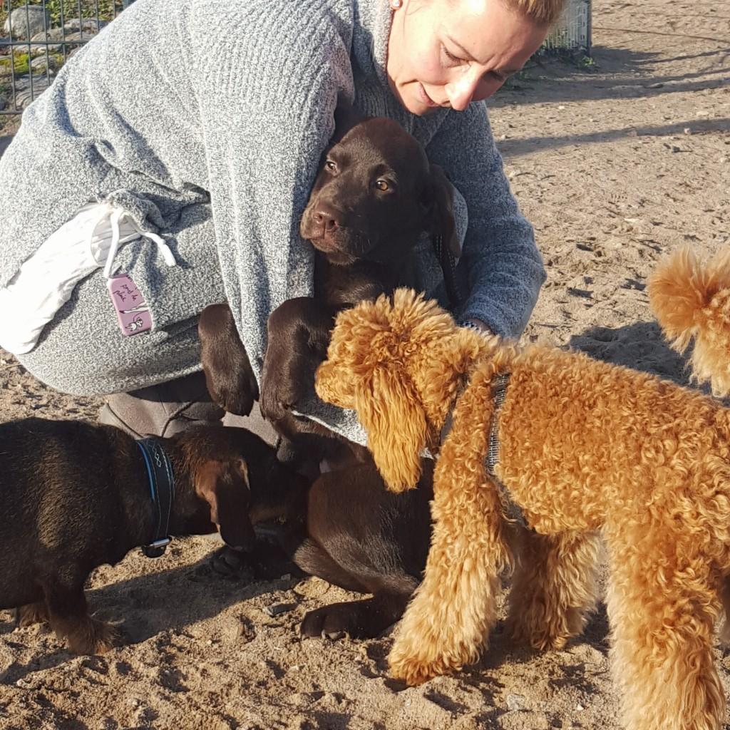 puppy hondenpark