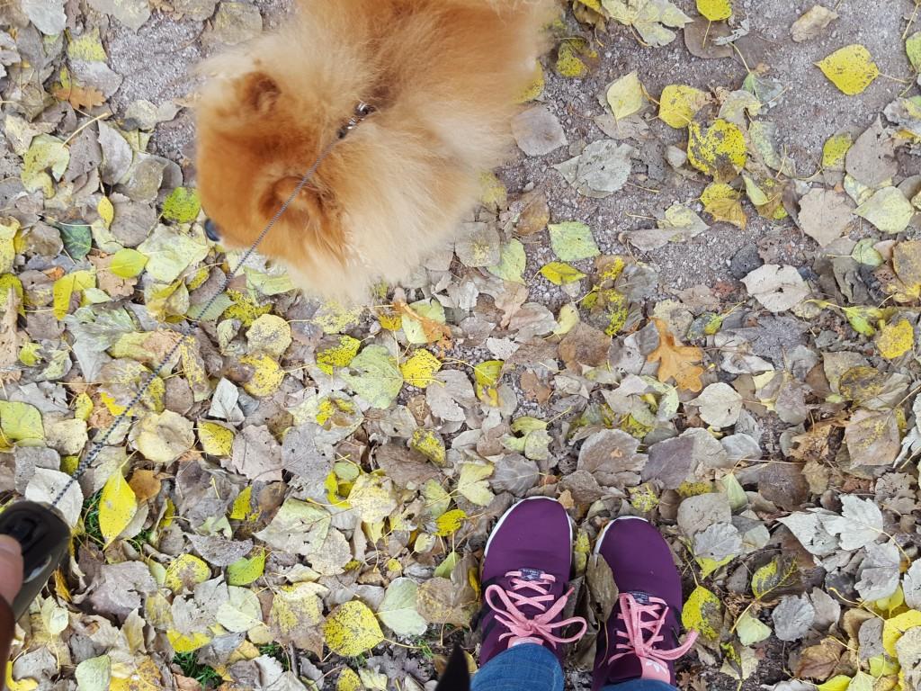 wandelen met prince