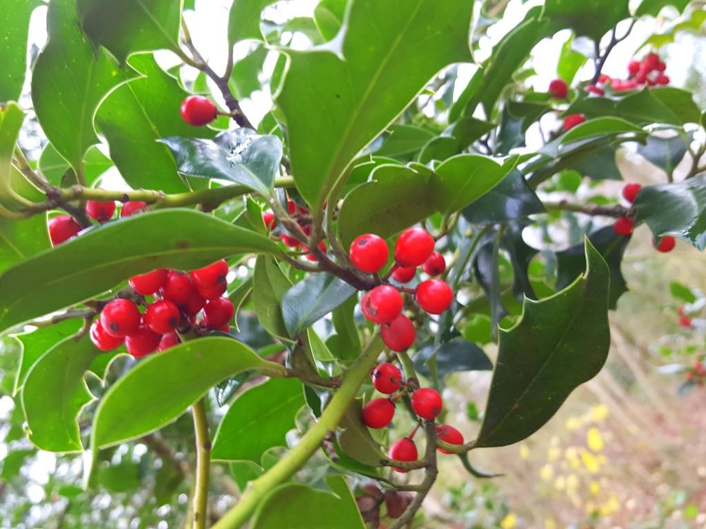 natuur bessen kerst