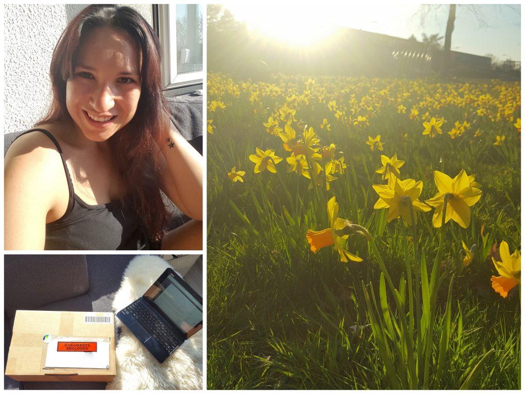 diaryblog flower feeld sunshine