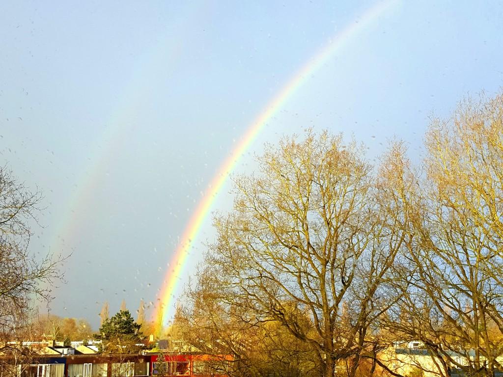 regenboog nederland