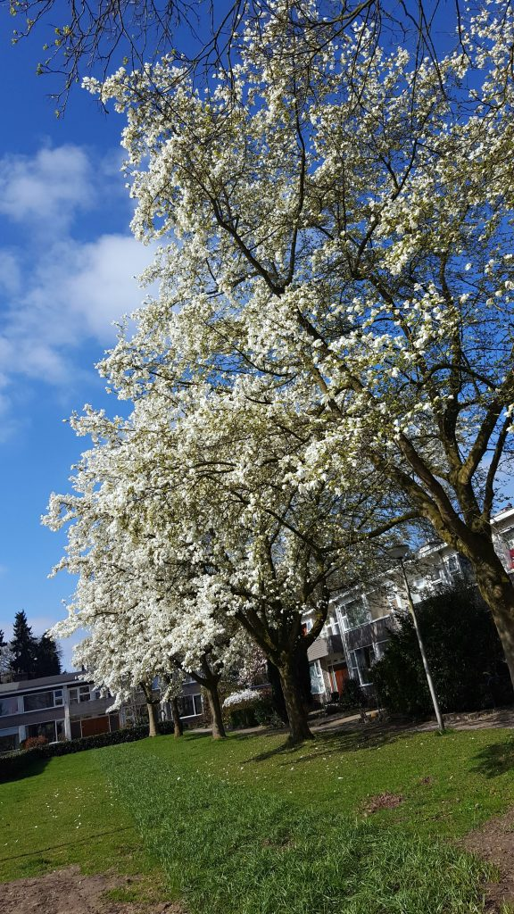bomen in bloei genieten