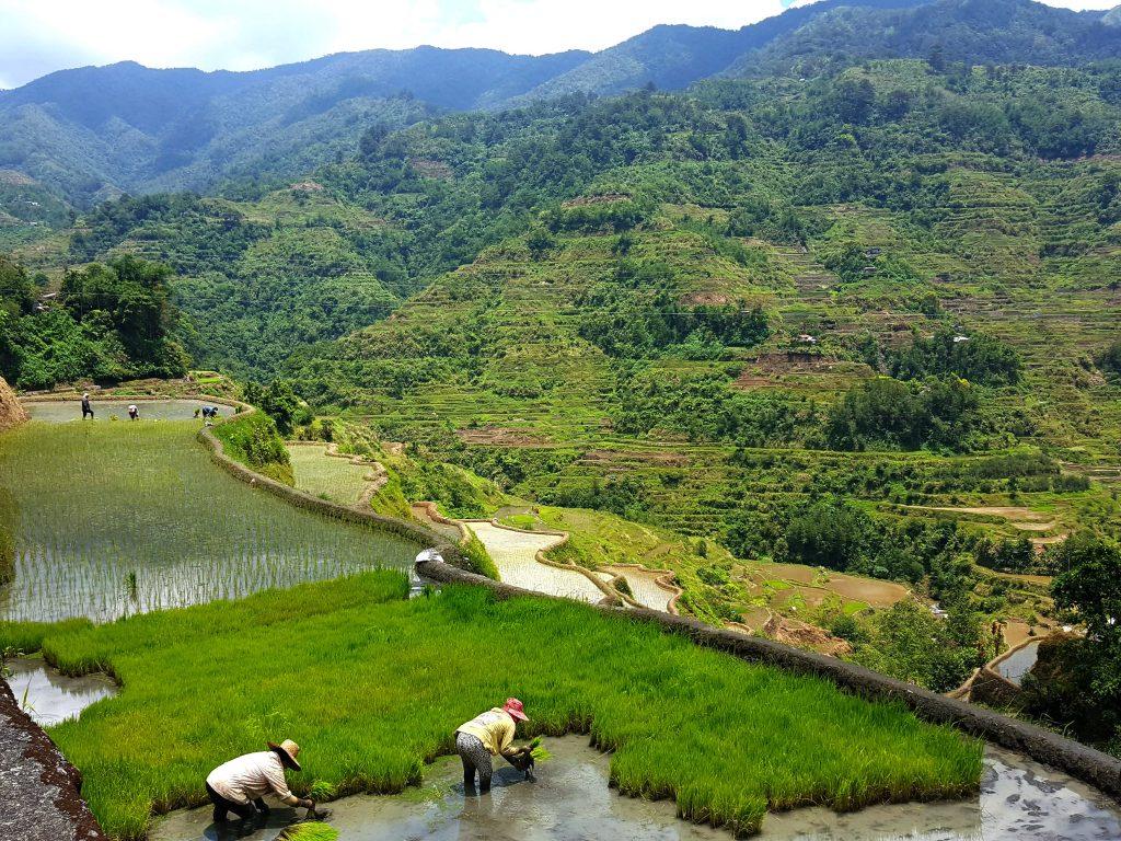 banaue rijstvelden filipijnen