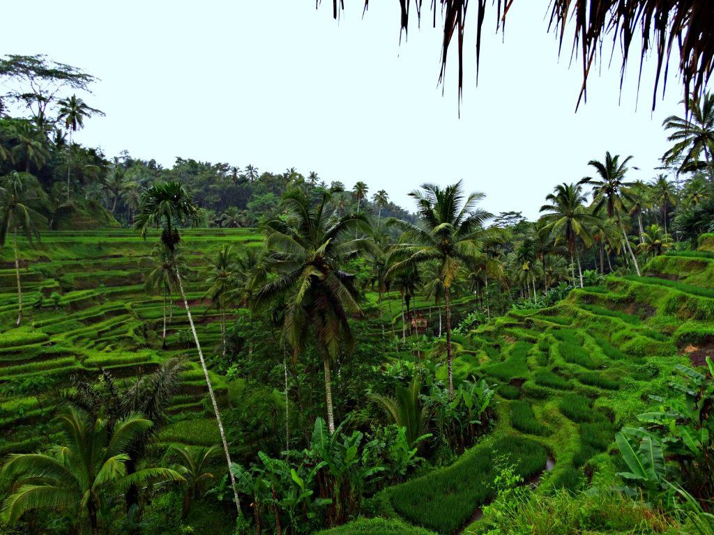 bali rijstvelden ubud Tegalalang
