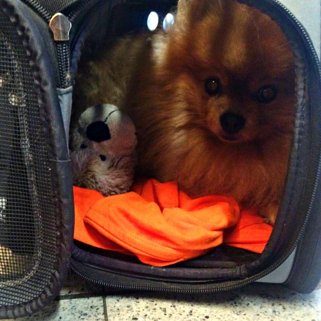 vliegen met je hond reistas