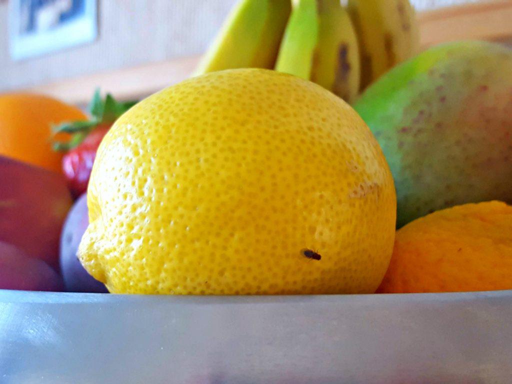 doctor clean wondermiddel tegen fruitvliegjes fruit citroen